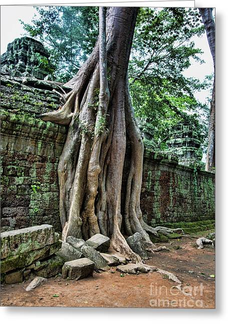 Unesco Ta Prohm Temple  Greeting Card by Chuck Kuhn