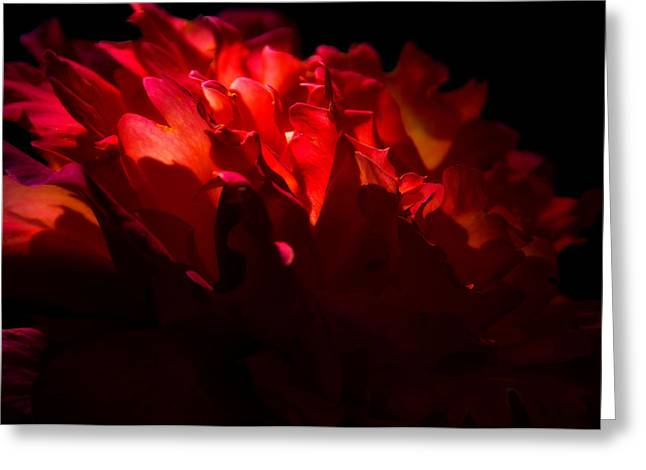 Unfailing Love  Greeting Card by Deb Cohen