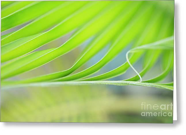 Unfurling Palm Leaf Macro Greeting Card