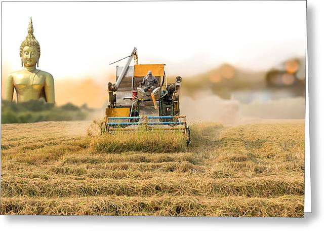 Unidentified Man With Harvester Machine To Harvest Rice Field An Greeting Card
