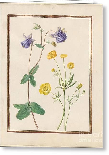 Unidentified Purple Flower  Greeting Card