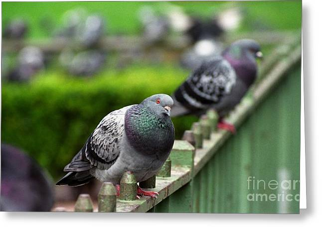Union Square Pigeons Greeting Card