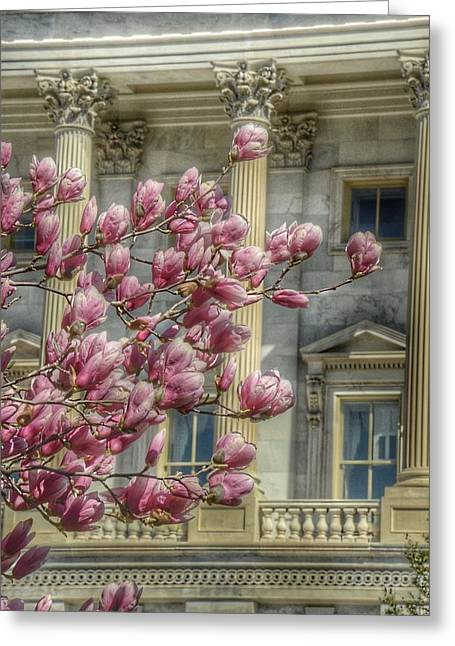 United States Capitol - Magnolia Tree Greeting Card by Marianna Mills