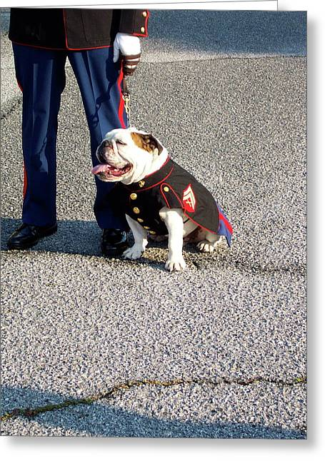 United States Marine Corp. Bulldog Greeting Card