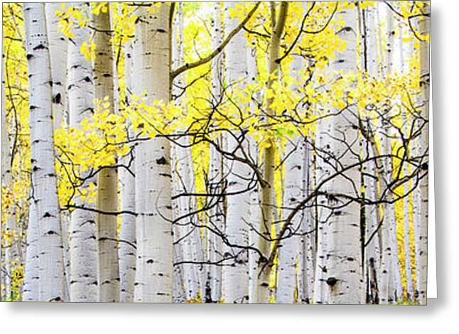 Unititled Aspens No. 6 Greeting Card by The Forests Edge Photography - Diane Sandoval