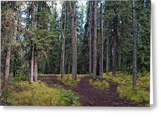 University Of Alaska Fairbanks Trail System Greeting Card