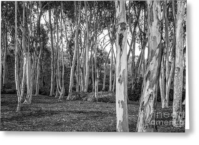 University Of California San Diego Landscape Greeting Card by University Icons