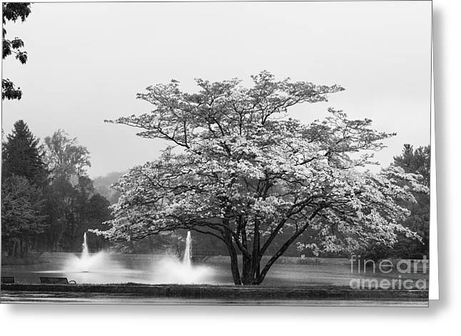 University Of Connecticut Landscape Greeting Card by University Icons