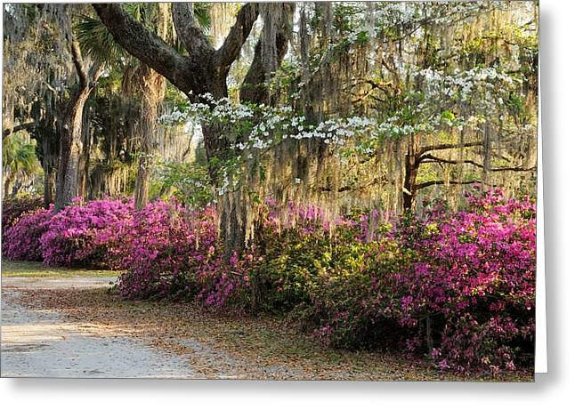 Unpaved Road In Spring Greeting Card