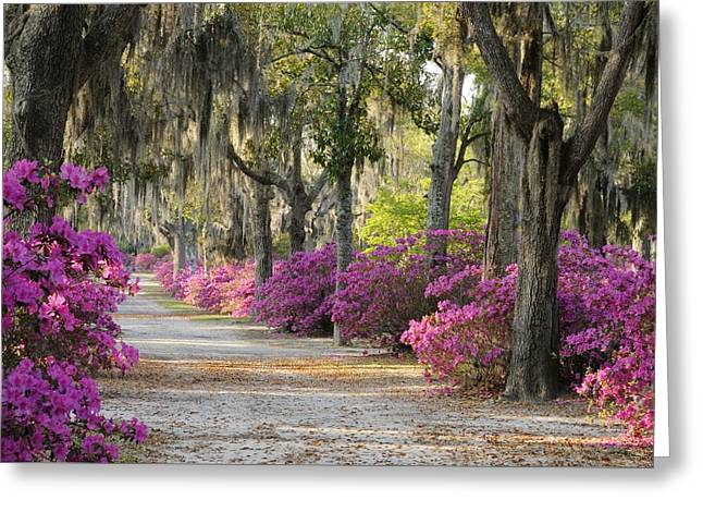 Unpaved Road With Azaleas And Oaks Greeting Card