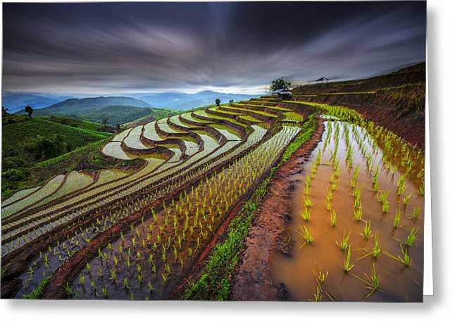 Unseen Rice Field Greeting Card by Tetra