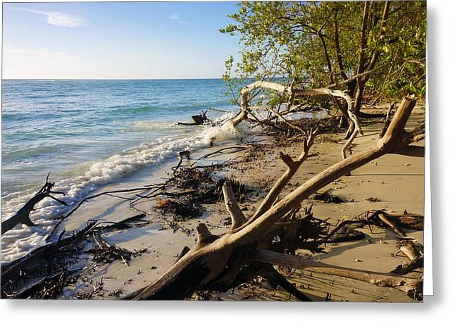 The Unspoiled Beaty Of Barefoot Beach Preserve In Naples, Fl Greeting Card