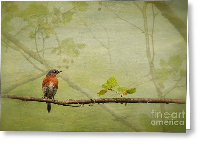 Bird In Tree Greeting Cards - Until Spring Greeting Card by Lois Bryan