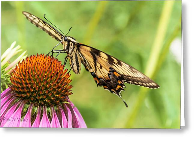 Untitled Butterfly Greeting Card