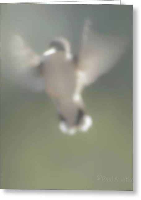 Untitled Hummingbird Greeting Card