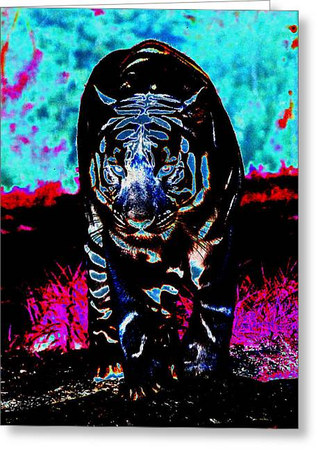 Greeting Card featuring the photograph Unusual Tiger On The Prowl by Maggy Marsh