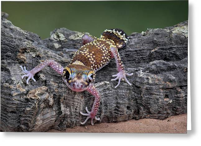 Greeting Card featuring the photograph Up And Over - Gecko by Nikolyn McDonald