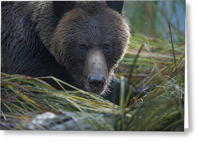 Up Close And Personal With A Grizzly Greeting Card by Bill Cubitt