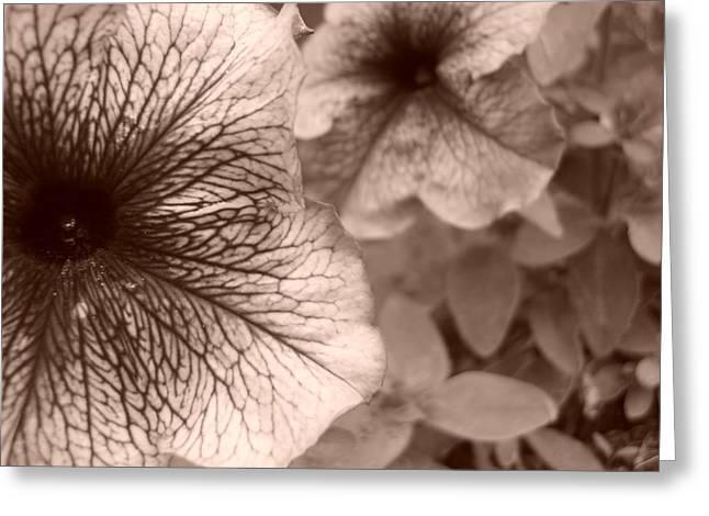 Up Close Greeting Card by Jennifer Compton