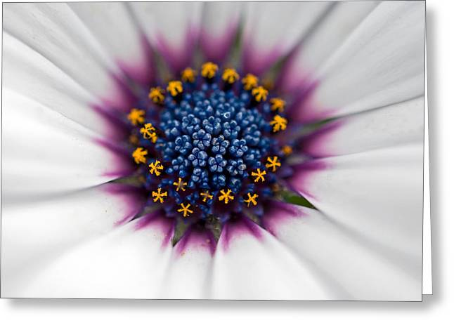 Up Close Greeting Card by Maria Dryfhout