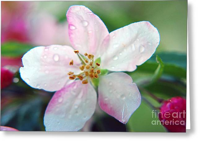 Greeting Card featuring the photograph Up Close Spring Blossom  by Lila Fisher-Wenzel