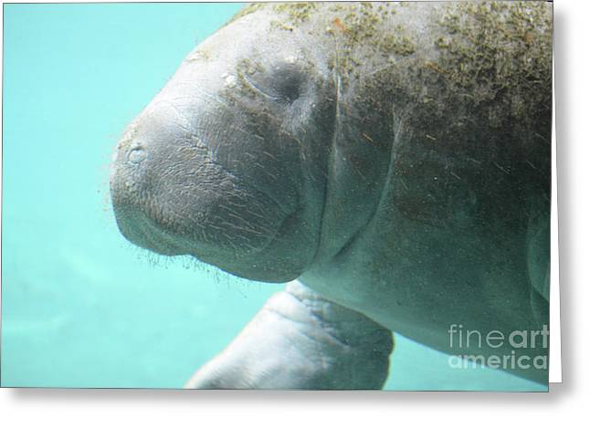 Up Close With A Manatee Greeting Card by DejaVu Designs