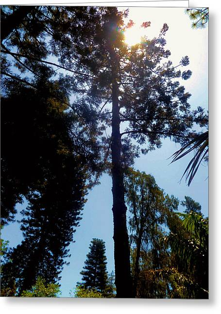 Up In The Sky Trees Greeting Card