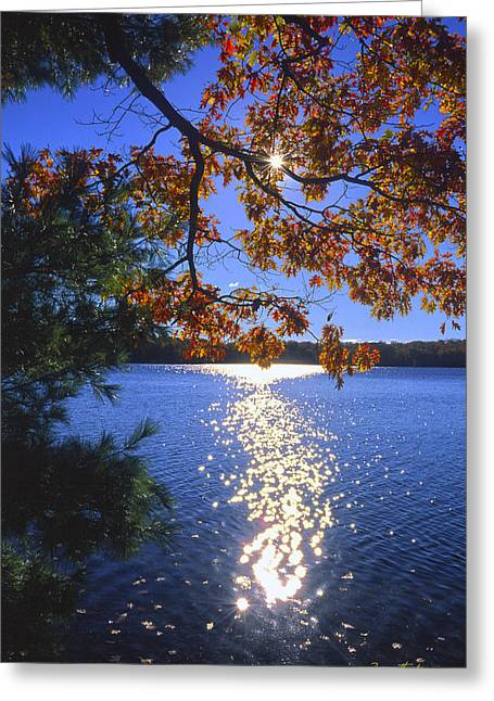 Up North Morning Greeting Card