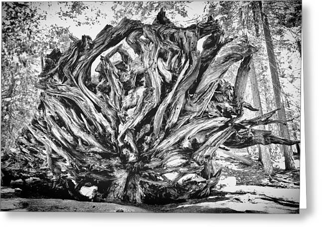 Up Rooted Greeting Card by Aron Kearney