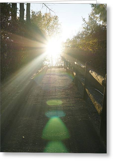 Up To The Sun Greeting Card by Lilia D
