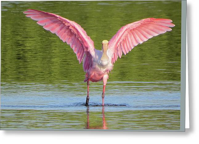 Up, Up And Away Sanibel Spoonbill Greeting Card