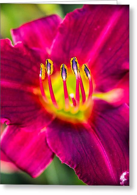 Upclose And Purple Greeting Card