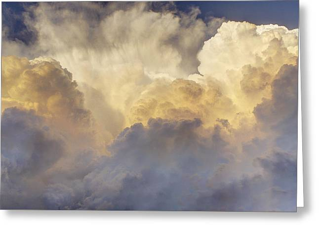Updraft Of Cotton Greeting Card