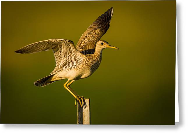 Upland Sandpiper On Steel Post Greeting Card