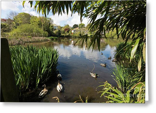 Upper Mill Pond Hayle Greeting Card