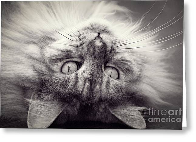 Upside Down Cat Greeting Card by Elaine Hillson
