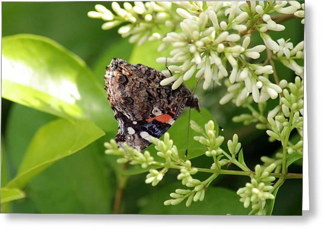 Upside Down Nectar Collector Greeting Card by ShadowWalker RavenEyes Dibler