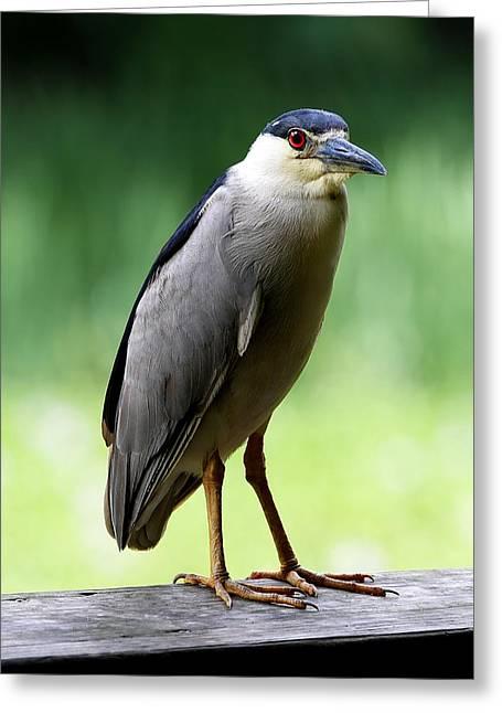 Upstanding Heron Greeting Card