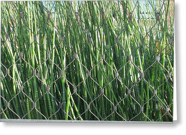 Bamboo Fence Greeting Cards - Urban Jungle Greeting Card by Hasani Blue