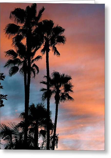 Urban Palms Greeting Card by Peter Breaux
