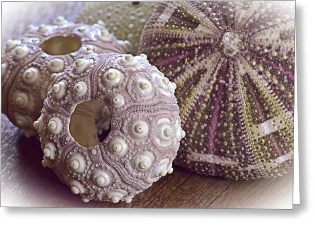 Urchin Shells Greeting Card by Bonnie Bruno