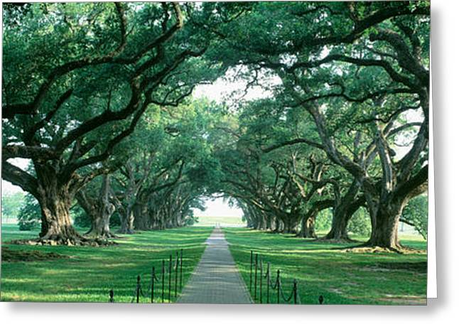 Tree Lines Greeting Cards - Usa, Louisiana, New Orleans, Brick Path Greeting Card by Panoramic Images