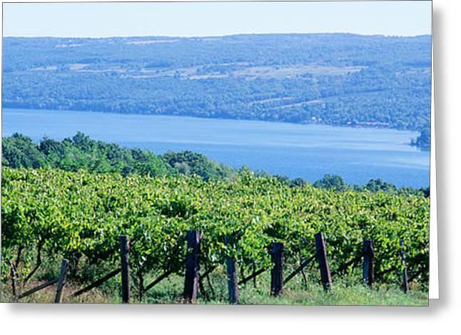 Grape Vineyards Greeting Cards - Usa, New York, Finger Lakes, Vineyard Greeting Card by Panoramic Images