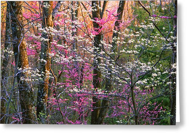 Usa, Virginia, Shenandoah National Park Greeting Card by Panoramic Images