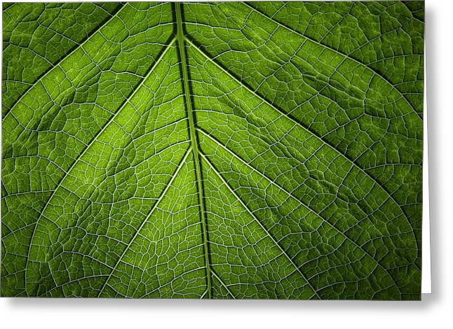 Usbg Leaf One Greeting Card