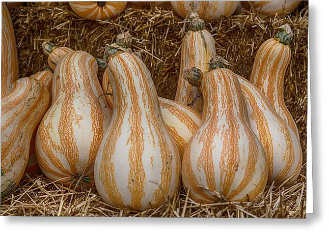 Ut Vols Gourds Greeting Card