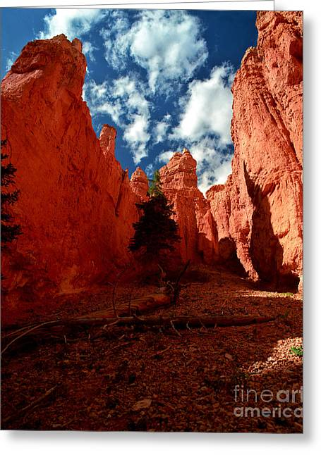 Utah - Bryce Canyon Greeting Card