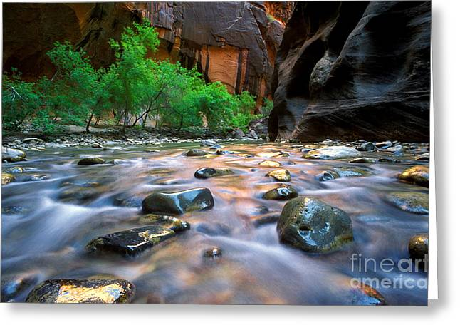Utah - Virgin River 5 Greeting Card