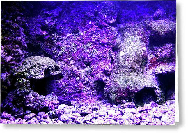 Greeting Card featuring the photograph Uw Coral Stone 2 by Francesca Mackenney
