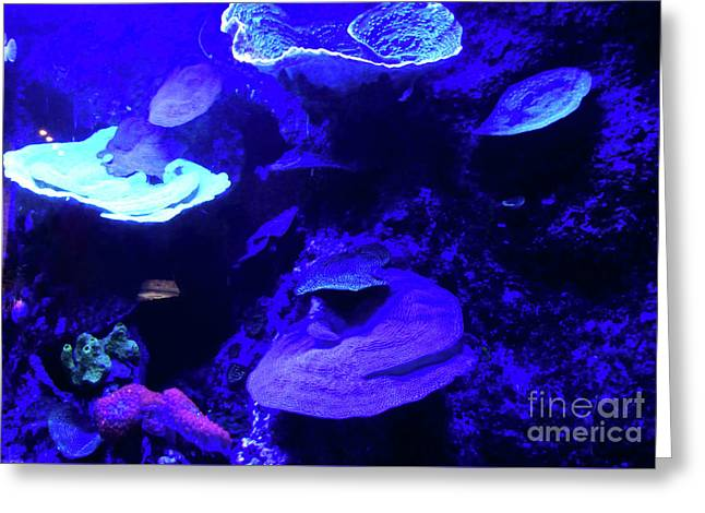 Greeting Card featuring the photograph Uw Neon Coral by Francesca Mackenney